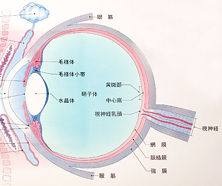 マリオット盲点・視神経乳頭